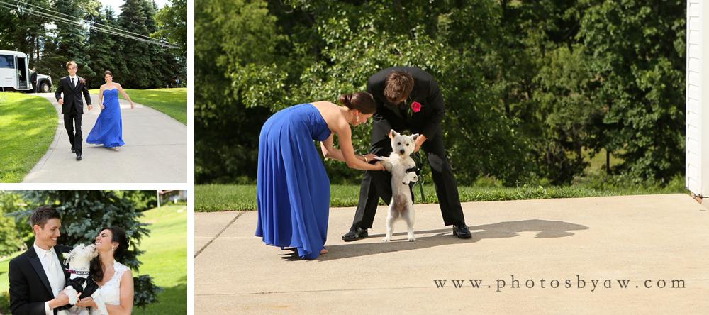 dog_in_tuxedo
