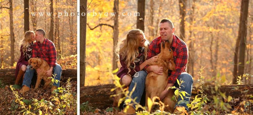 golden retriever engagement photos
