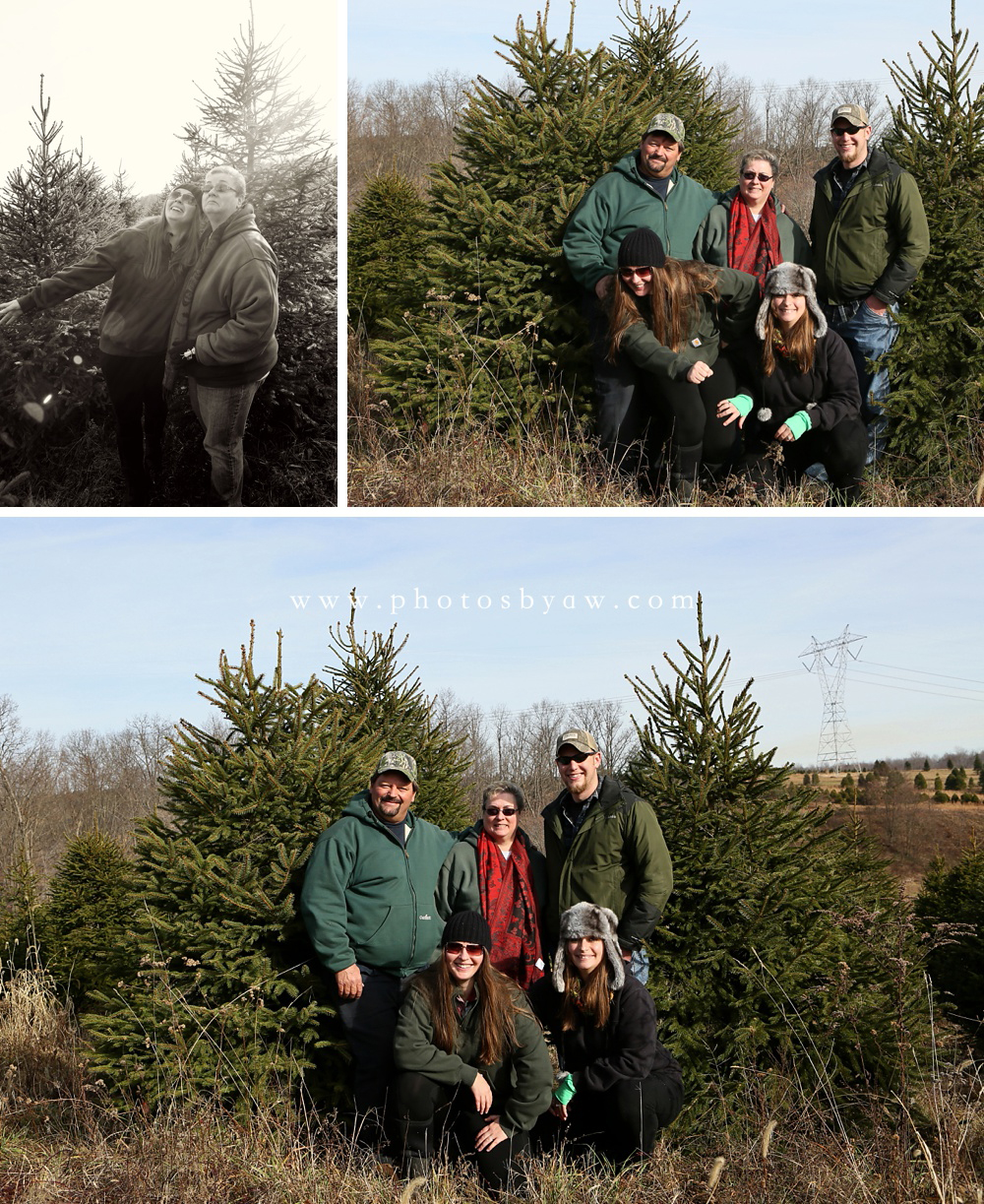 family photos in christmas tree field