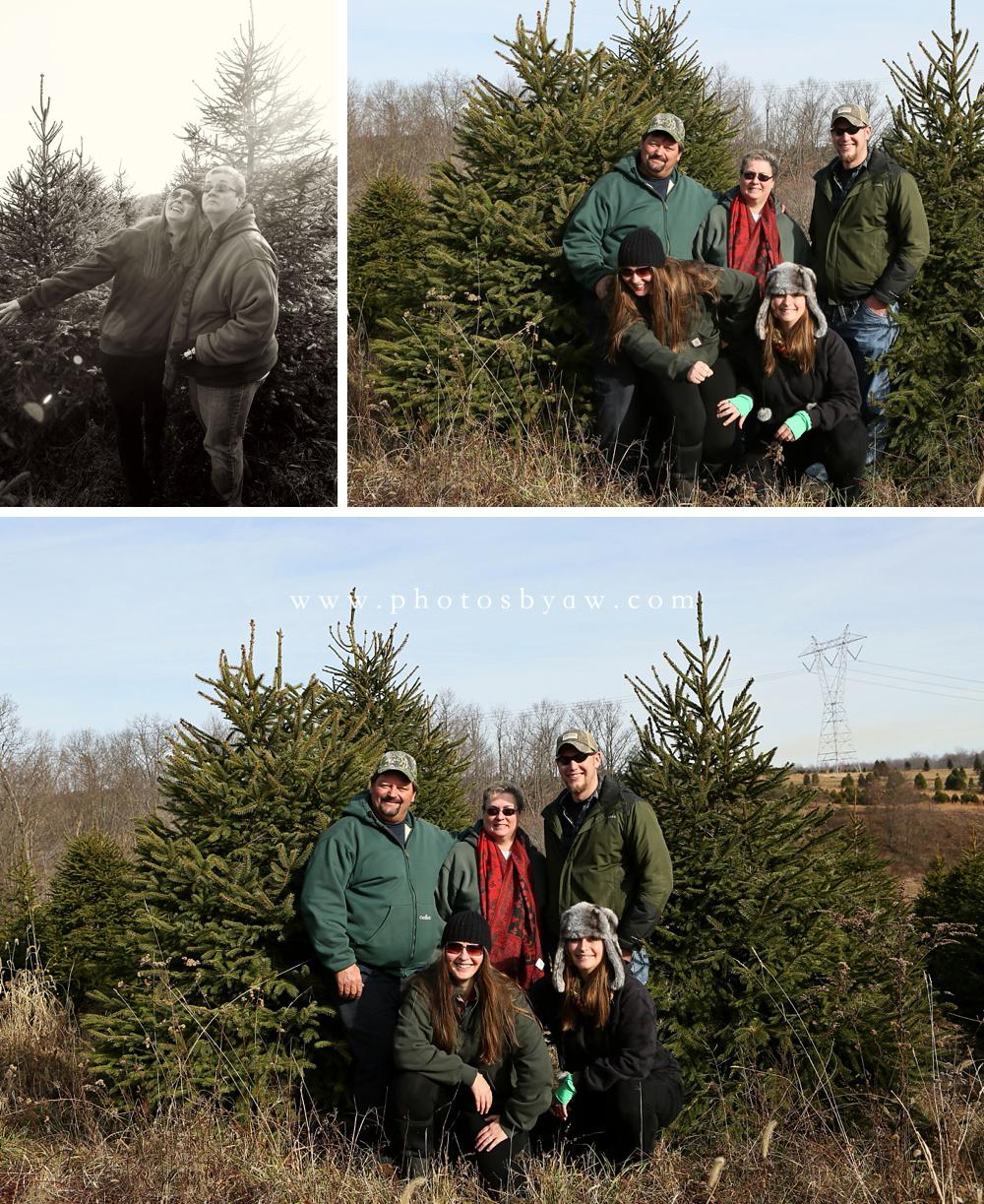 Christmas Tree Field Family Photos