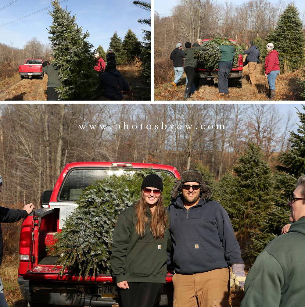 christmas photos in tree field