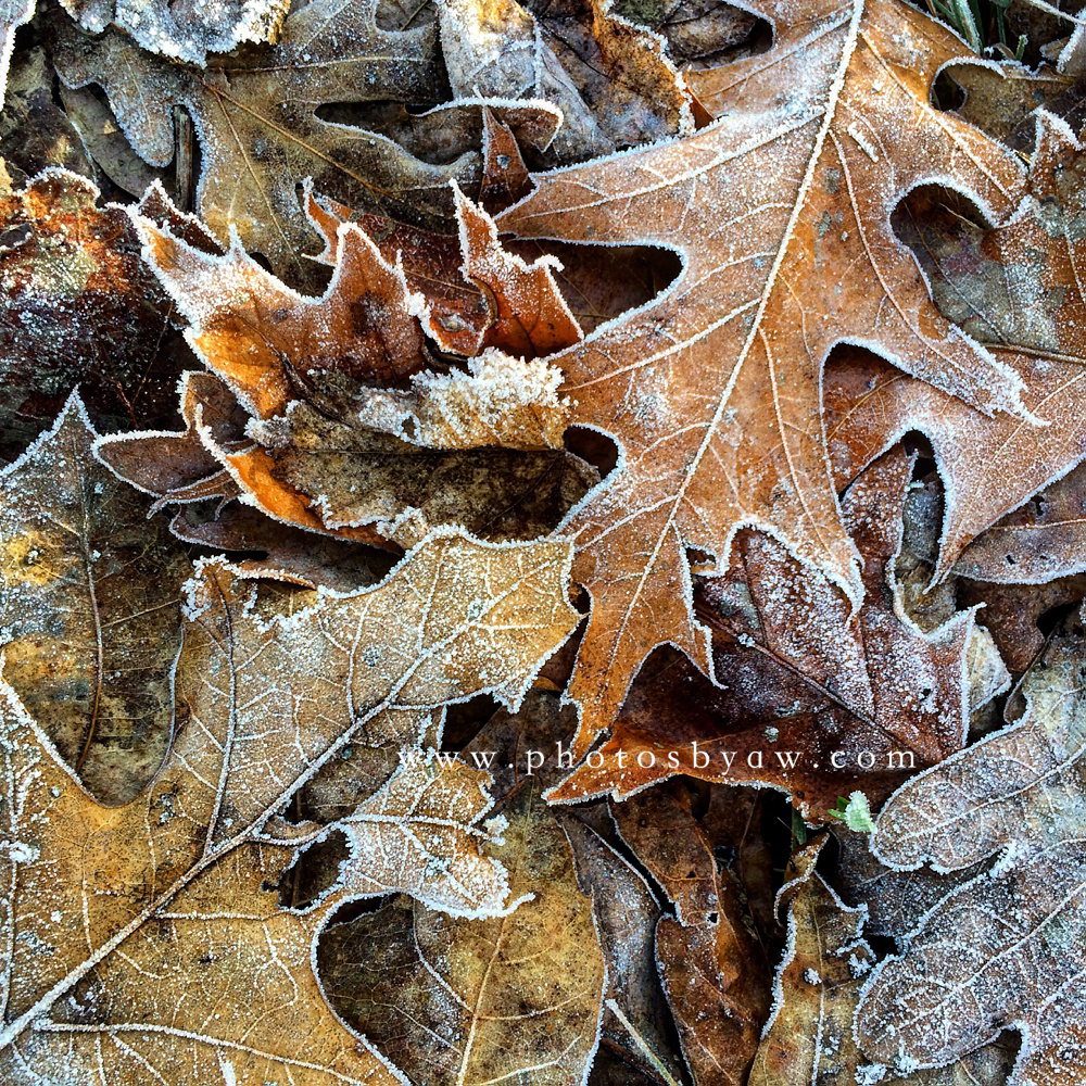 fall leave frost