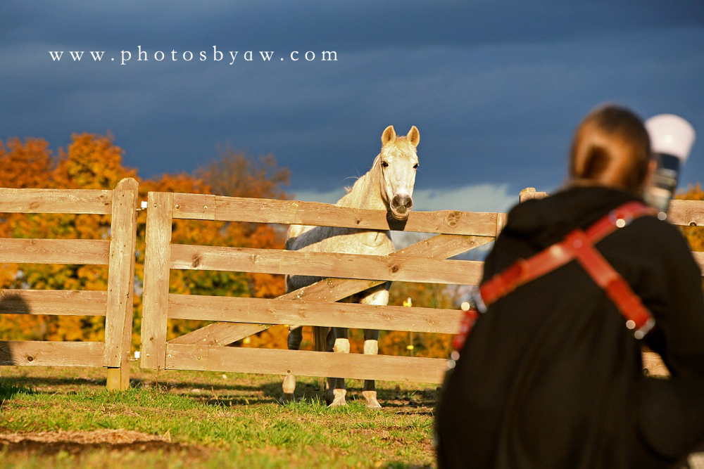 photographer working with horses