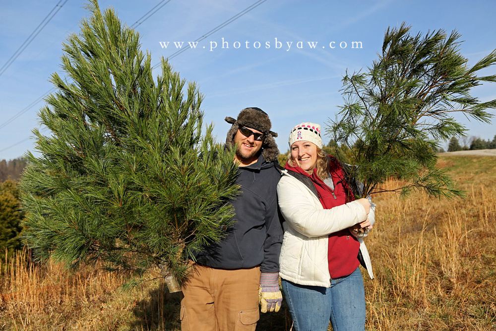 christmas tree field photo session
