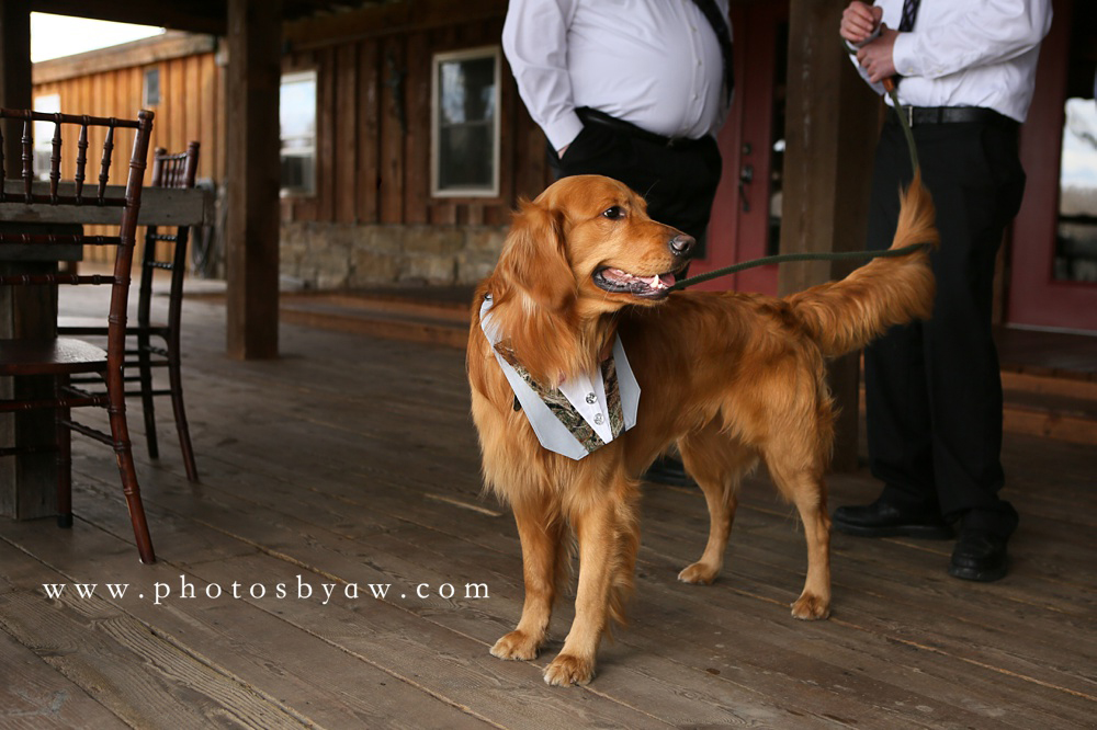 wedding-dog-photos