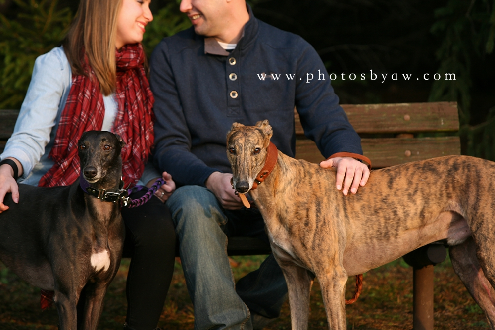 greyhound_rescue_love