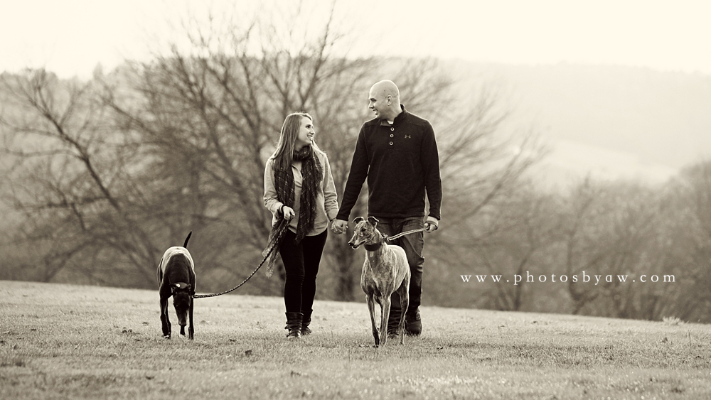 black_and_white_engagement_greyhounds