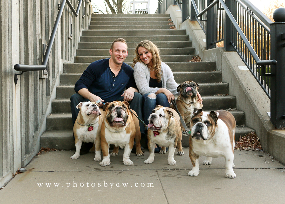 bulldog_pet_portraits