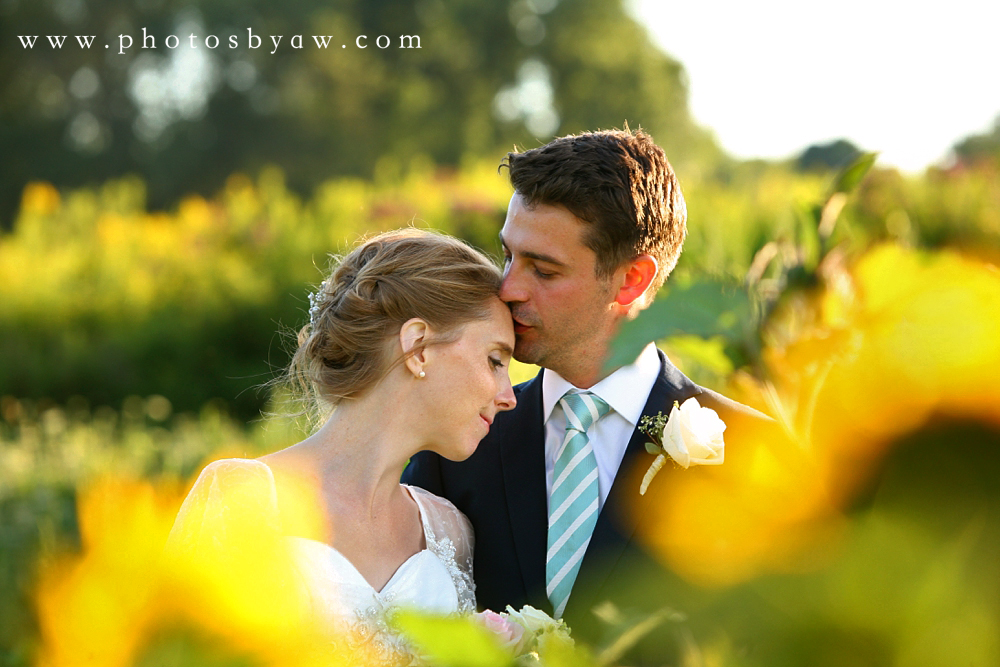 sunflower_wedding_photos_lingrow_farm