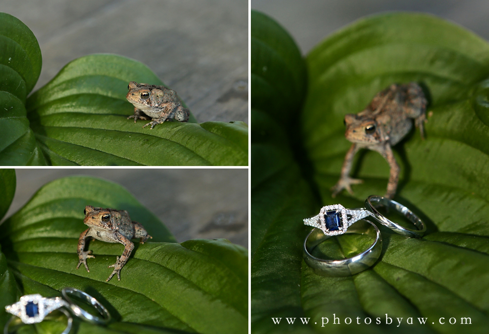wedding_ring_shot_frog