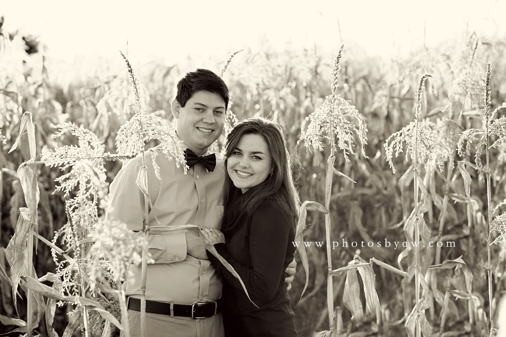 cornfield engagement photos