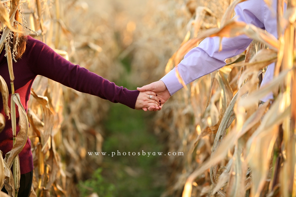 cornfield engagement